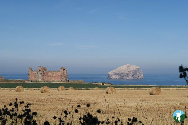 tantallon bass rock things to do around edinburgh.