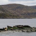 seals colony loch coruisk