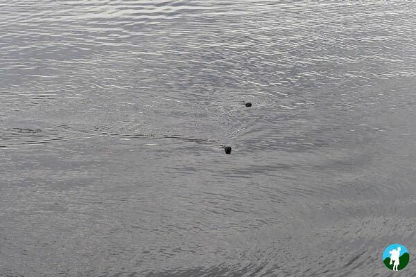 seals isle of skye wildlife boat tours