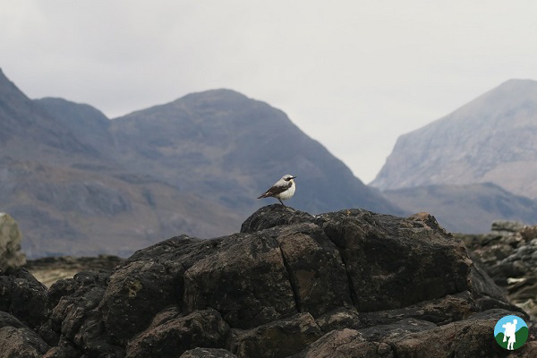 wagtail elgol skye wildlife boat tours