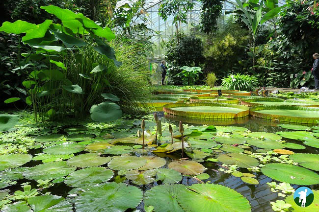 edinburgh royal botanic gardens fountain court apartments