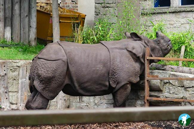rhino edinburgh zoo fountain court apartments