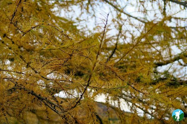 big tree country perthshire trees
