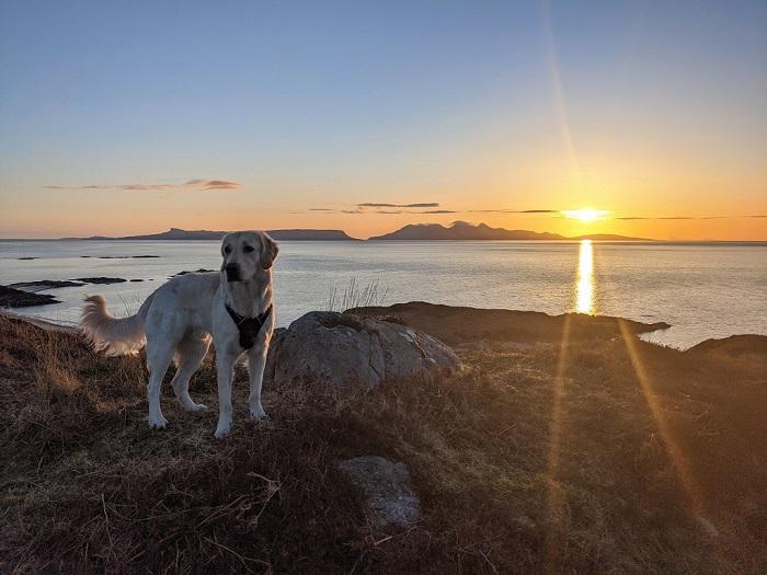 dog scotland sunset
