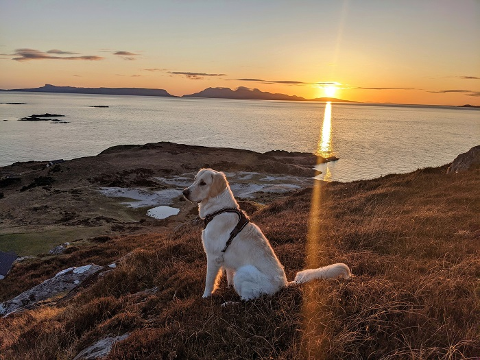 dogs living in the scottish highlands